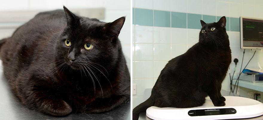 Как Можно Коту Похудеть. Как заставить кошку похудеть?