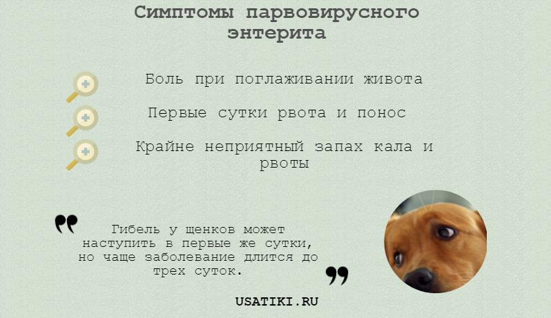 Симптомы парвовирусного энтерита у собак