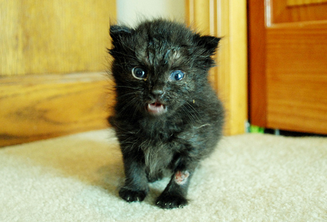 От чего коты болеют бешенством