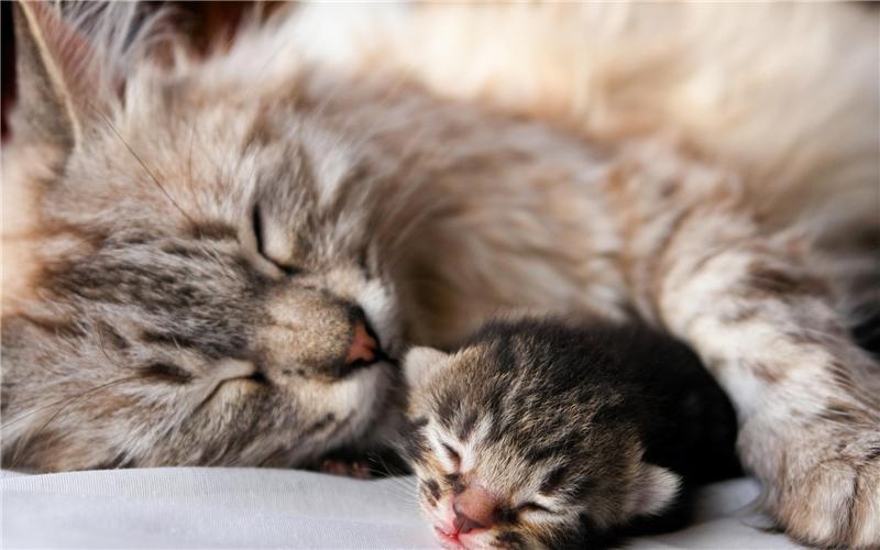кошка и новорожденный котенок