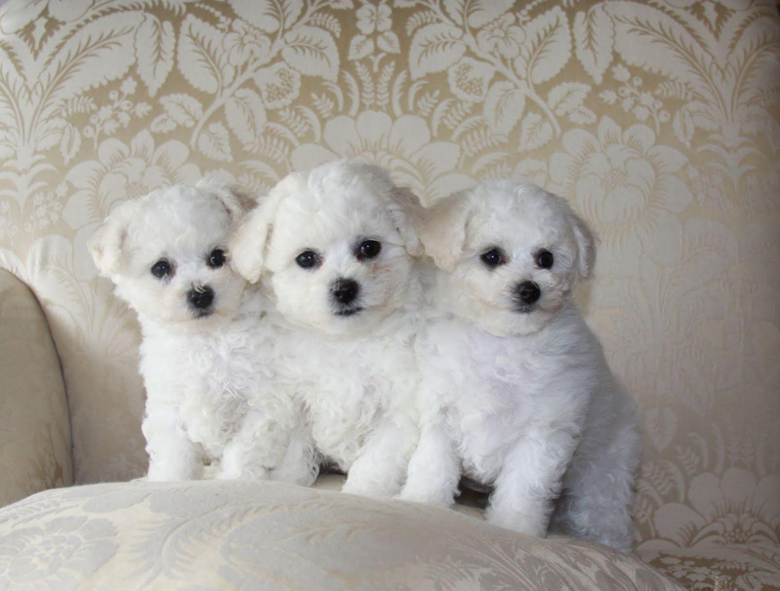 мелкие породы собак с фотографиями и названиями