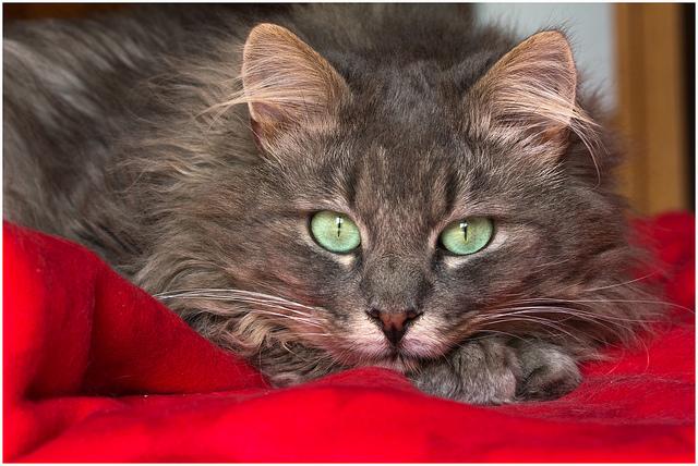 как вылечить кошку больную циррозом