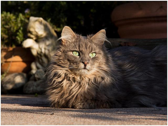 симптомы панкреатита у кошки