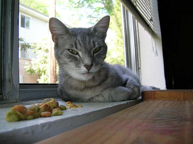Кот ест и все вырывает