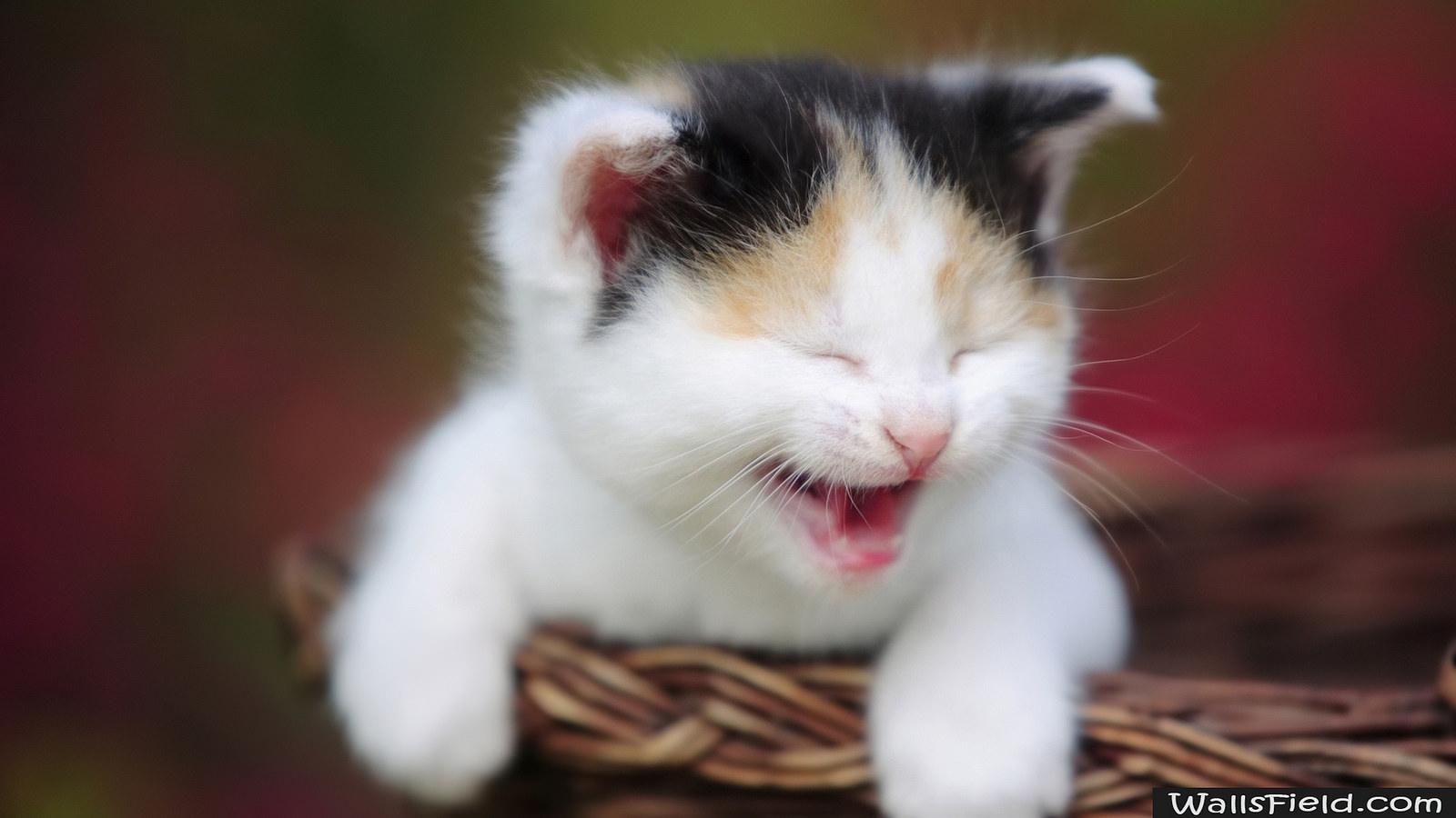 Почему часто мяукает кот