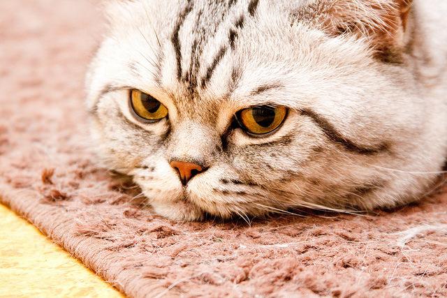 Как узнать когда кот метит