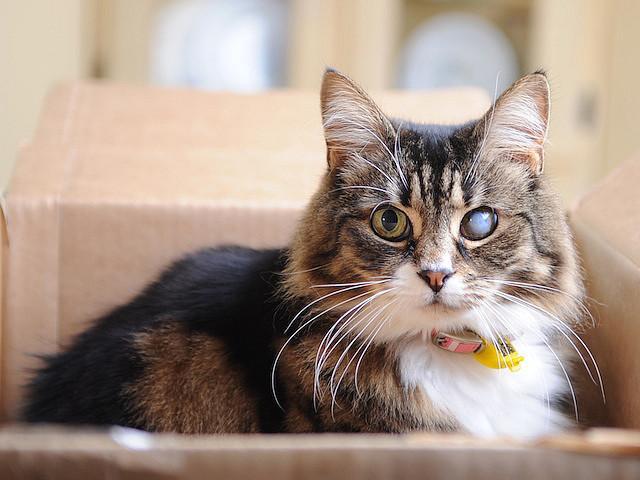 Если у кота гноятся глаза и чихает чем лечить