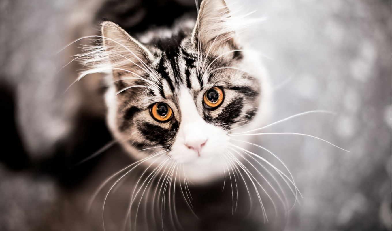 Как правильно называются усы у кошек