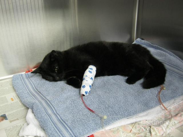 мочекаменная болезнь у кошки после операции