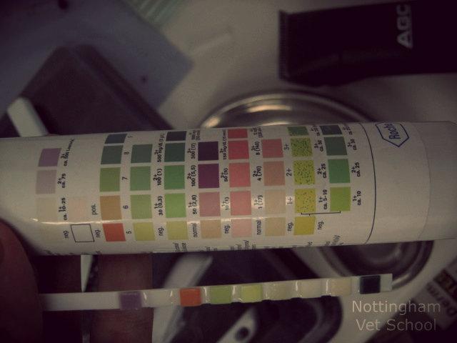 Экспресс-тест поможет быстро узнать рН мочи питомца