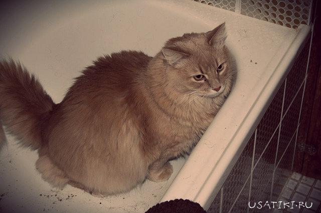Кот не может пописать тужиться и не может