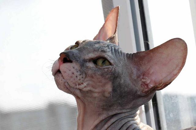 десны кошки фото