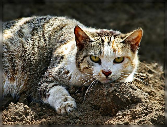симптомы цирроза печени у кошки