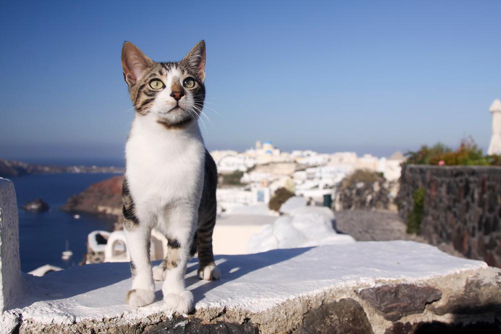 ходе греческие кошки картинки очень любите поделки