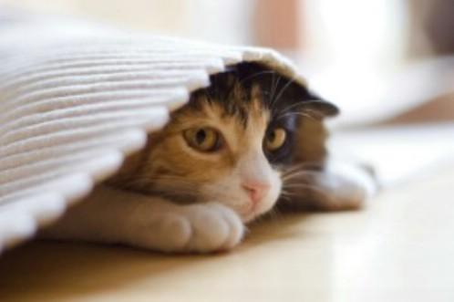 Что может вызвать стресс у кота