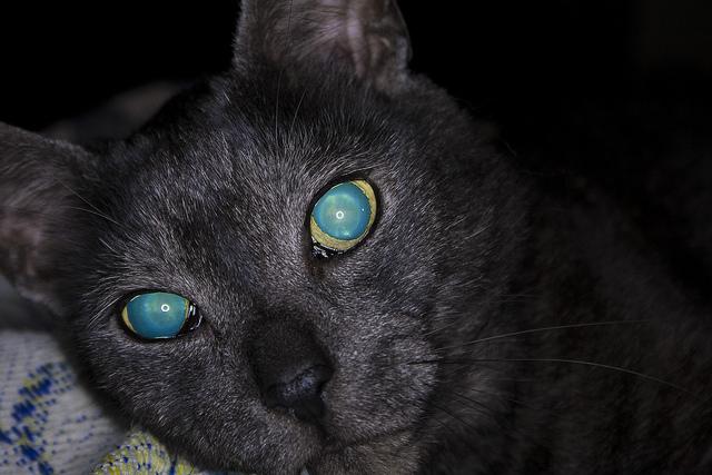 Почему у кота светится только один глаз