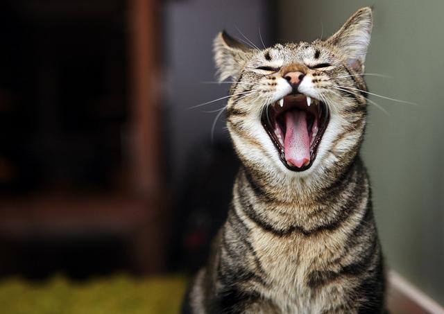 Кот метит углы как отучить