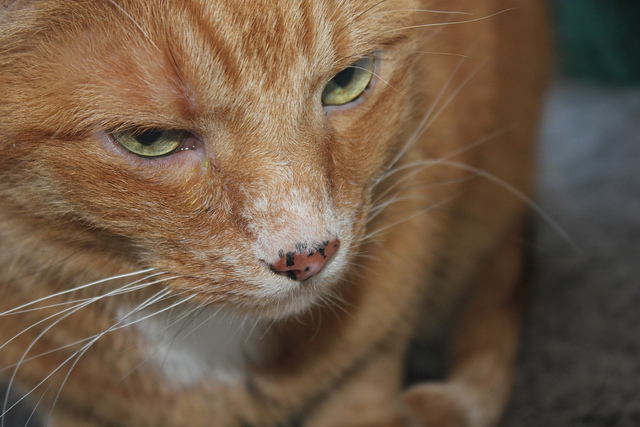 Кошка щурит глаза при болезни