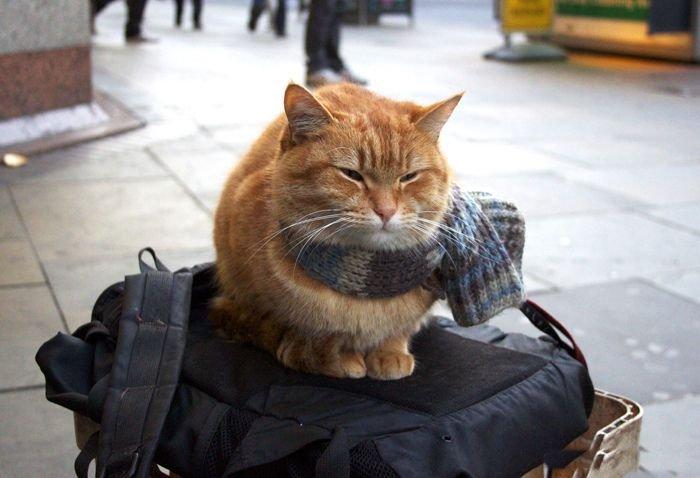 Если кот заблудился
