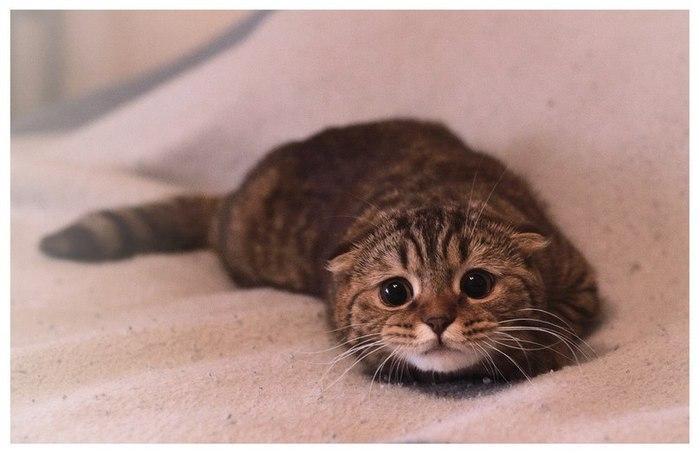 Химические ожоги у кошек