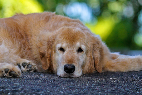 Собака с язвой желудка вялая