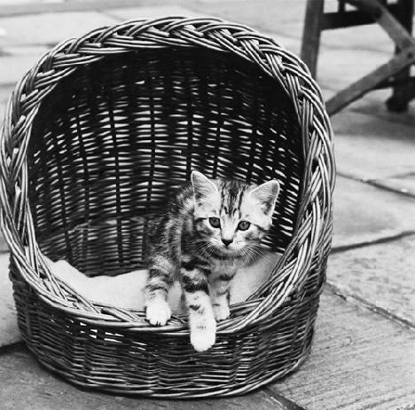 Спи, котенок, сладко-сладко! Это вот твоя кроватка...