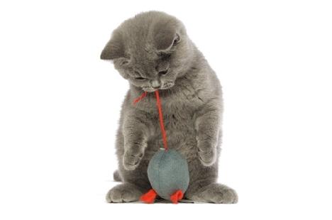 Игрушки необходимы для гармоничного развития котенка