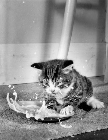 Воспитание котенка - это тяжелый труд