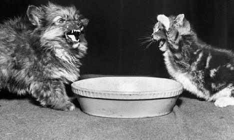 Котенок не ест что делать