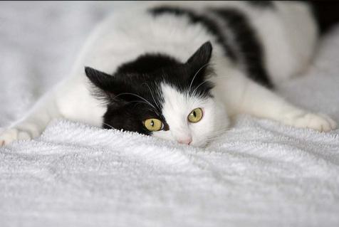 Кошка в 4 месяца просит кота
