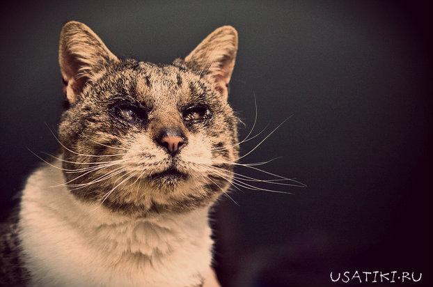 Лечение ожога у кота