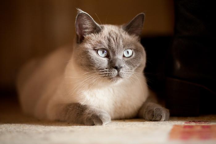 Как правильно наказать кота  приучаем пушистого проказника к дисциплине