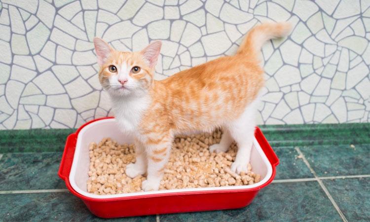Симптомы глистов у кошек, виды гельминтов, диагностика, лечение