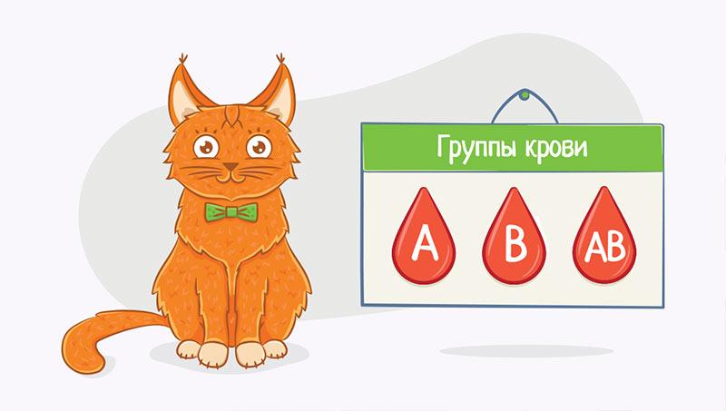 Группы крови у котов