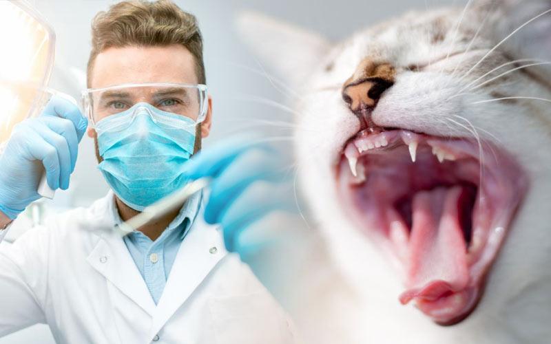 Как чистить зубы коту и почему это так важно