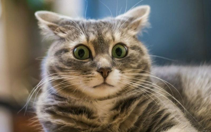 Второй кот в доме - знакомство с новым жителем