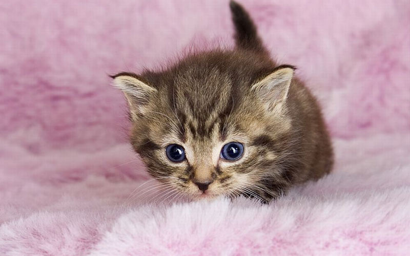 кого лучше выбрать, кота или кошечку
