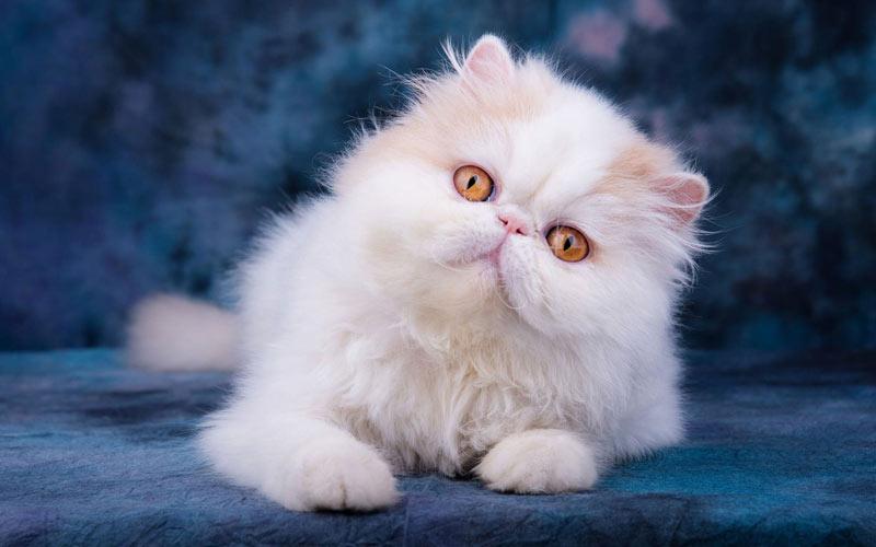 Как выбрать красивого и здорового котенка