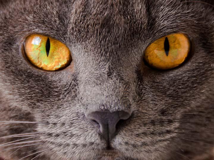 Глаза картезианской кошки