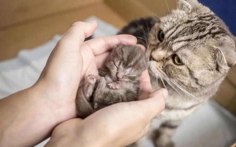 Материнский инстинкт у кошки, почему кошки отказываются от котят