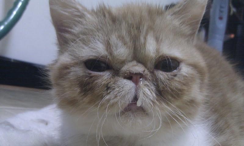 У кота насморк опух глаз