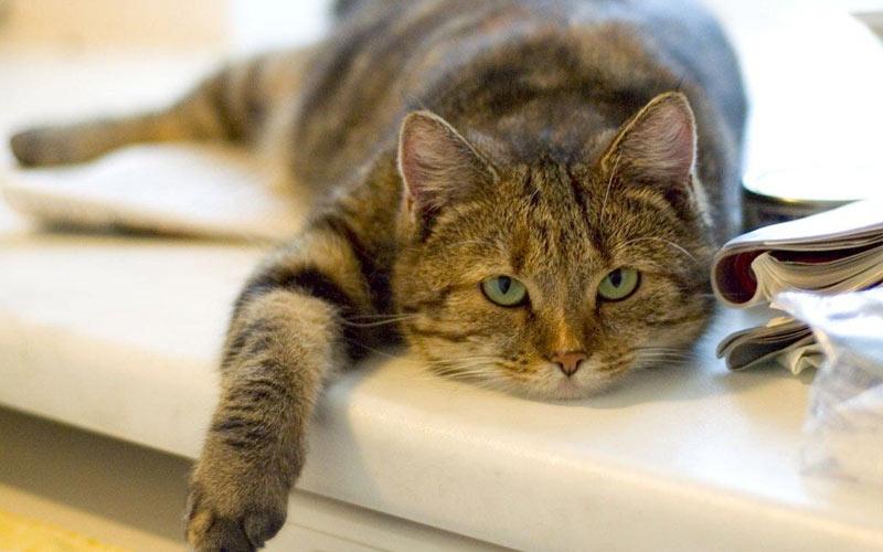 почему кот не ест - причины, симптомы, заболевания