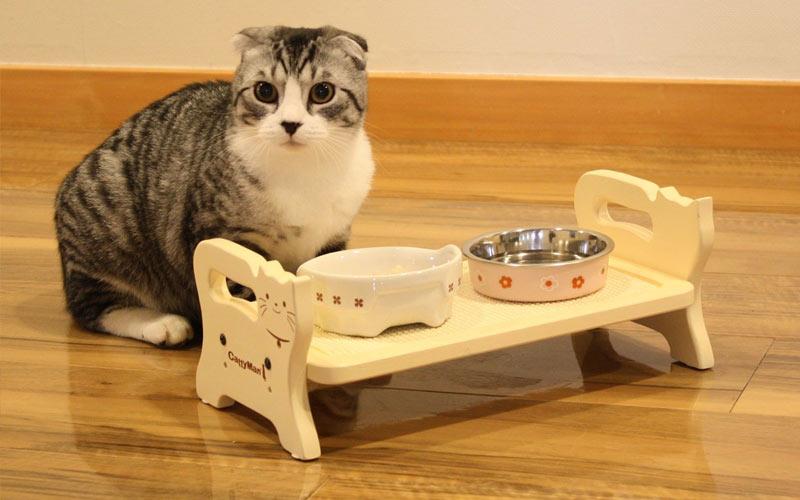 Что делать, если кот не хочет есть