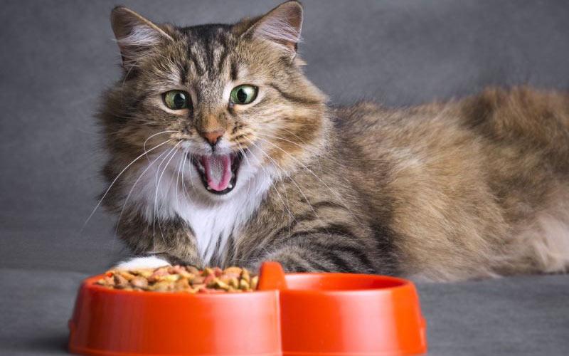 Почему коты могут отказаться от пищи