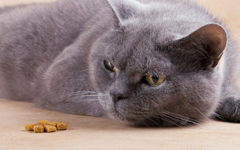 Помощь коту в домашних условиях (проблемы с желудком)