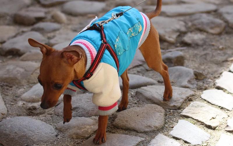Одежда для собак: выбор, размеры, кому нужна