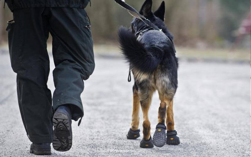 Нужна ли собакам одежда и обувь