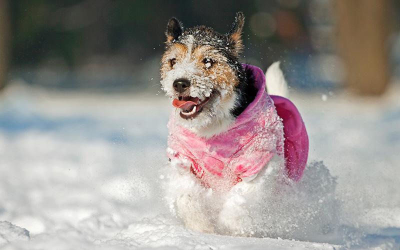 Одежда для собаки в зимний период - красота или необходимость