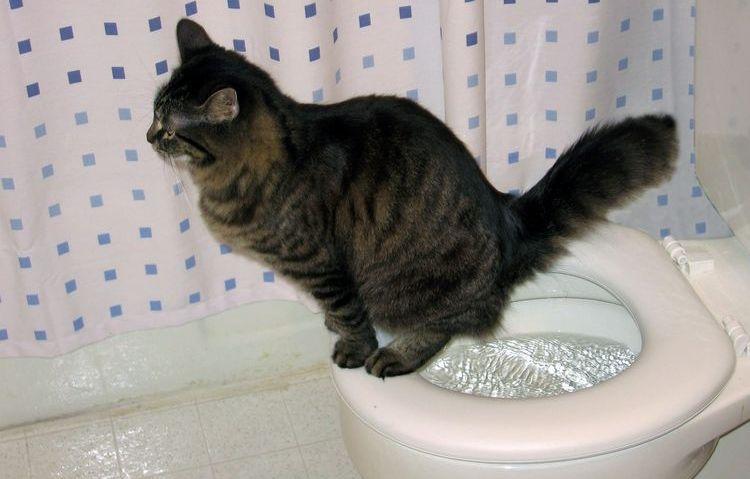 Кота приучили к унитазу