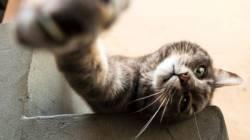 Клещи у кошек и котов: фото, виды, симптомы и лечение